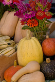 Organic squash and flowers at farmers market; October 2009, Nevada City California