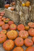 Pumpkins at roadside produce business just before Halloween