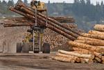 Massive logging machine moving logs at lumber mill, Coos Bay Oregon