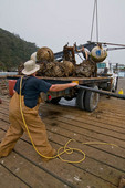 Dock workers loading mooring buoys onto truck for winter, Trinidad, California