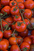 Organic tomatoes at farmers market in upscale California city near San Francisco