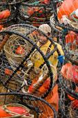 Young man on commercial fishing boat preparing crab pots for next trip, Westport, Washington USA