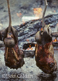 Roasting Caribou Heads
