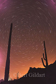 Stars are brilliant in Organ Pipe National Monument