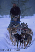 Mushing on a quiet winter day