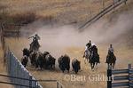 Bison Range Roundup