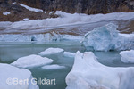 "Cavell Glacier ""calves"" chunks of ice into Cavell Lake; Jasper National Park, Alberta. Canada"