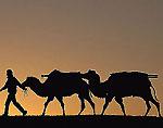 Westerner camel caravaning; Pamir Mtns. Kyrgyzstan, Central Asia