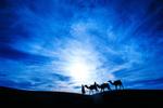 Camel caravan, Zagora, Sahara Desert, Morroco