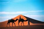 Cameling Sahara Desert, Morroco