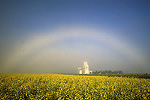 White rainbow, canola and grain elevators
