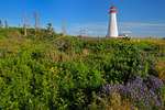 Lighthouse and wildflowers