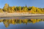 Autumn colored forest reflected in Lesser Slave Lake