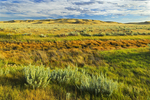 Grasslands (West Block). Grasslands National Park, Saskatchewan, Canada