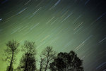 Star trails and trees with low level glow of northern lights (Aurora borealis)