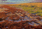 Vegetation turning color along the marine coastline of Hudson Bay