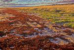 Vegetation turning color along the marine coastline of Hudson Bay