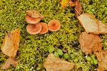 Mushrooms, moss and autumn leaves