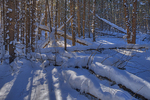 Snow in boreal forest