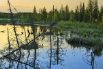Wetland in Boreal forest
