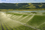 Irrigating potatoes in the Qu' Appelle Valley