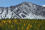 Larches and Canadian Rockies