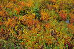 Shrubs in autumn colors
