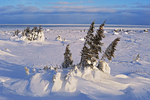 Winter on tundra along the Hudson Bay coast