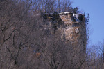 Mississippi River Bluffs Scenic with Bald Eagle in Tree at Wabasha, Minnesota    43370