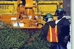 City Crew Grinds Christmas Trees  13710