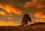 Sunset tinted clouds and lone pine tree, near Mesa Verde National Park