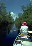 Canoeist in the Suwannee Canal, Okefenokee National Wildlife Refuge
