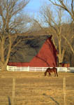 Horse in a pasture with white rail fence and red barn in the background.