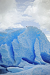 Icebergs in LeConte Bay, Stikine LeConte Wilderness, Tongass National Forest, Alaska