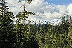 Snow capped peaks above old growth temperate rain forest in the Tongass National Forest, Alaska