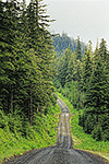 A forest Service road through temperate rain forest, Mitkof Island, Tongass National Forest, Alaska