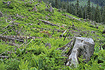 Clear cut logging in the temperate rain forest, Mitkof Island, Tongass National Forest, Alaska