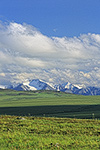 Summer Arctic tundra and the Philip Smith Mountains at the western edge of the Arctic National Wildlife Refuge, Alaska