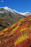 Brilliant fall tundra with dwarf willow, birch, and blueberry above Kuyuktuvuk Creek near Oolah Pass, Gates of the Arctic National Park, Alaska