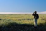 A hiker surveys frost covered wet tundra along the Sagavanirktok River, arctic coastal plain near Deadhorse, Alaska