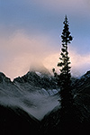 Fog at sunrise on Snowden Mountain with black spruce, Brooks Range, arctic Alaska