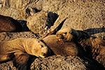 Sea lions rest in the sun at a rocky haul out on Resurrection Bay, Kenai Fjords National Park, Alaska