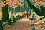 Older man and woman walking on a path by wood fence through a forest of Pacific Dogwood and Sequoia trees