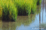Tall grasses and reflection in pond of grasses and trees