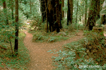 Path divided in the redwood forest.  Choices must be made.  Outcomes depend on our choices made.