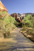 Virgin River with shimmering Cottonwood trees at base of steep, rocky cliffs