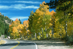 Quaking Aspens along scenic mountain highway in Autumn