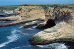 Steep cliffs, sandy beaches and cave by seashore.  Since the early 1970's when Wilder Ranch became a preserve, Wilder watershed is becoming a showcase of wilderness restoration in California, both as a home for native plants and animals.