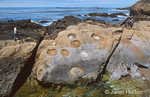 People walking on large boulders with abstract designs in them.  The geological history of Point Lobos is also spectacular, formed from a slow motion mixture of uplift, exposure, erosion, and underwater avalanche