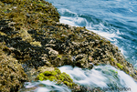 Waves crashing over Blue Mussels on rocky seashore with tide washing over them.